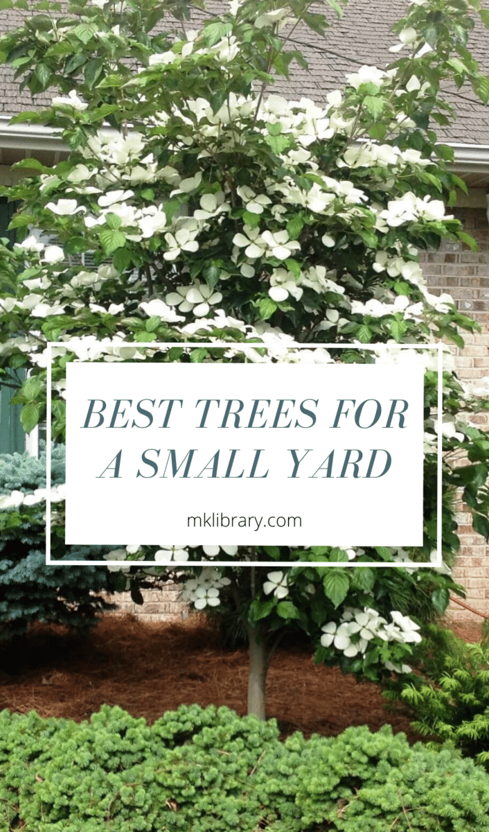 best trees for a small yard