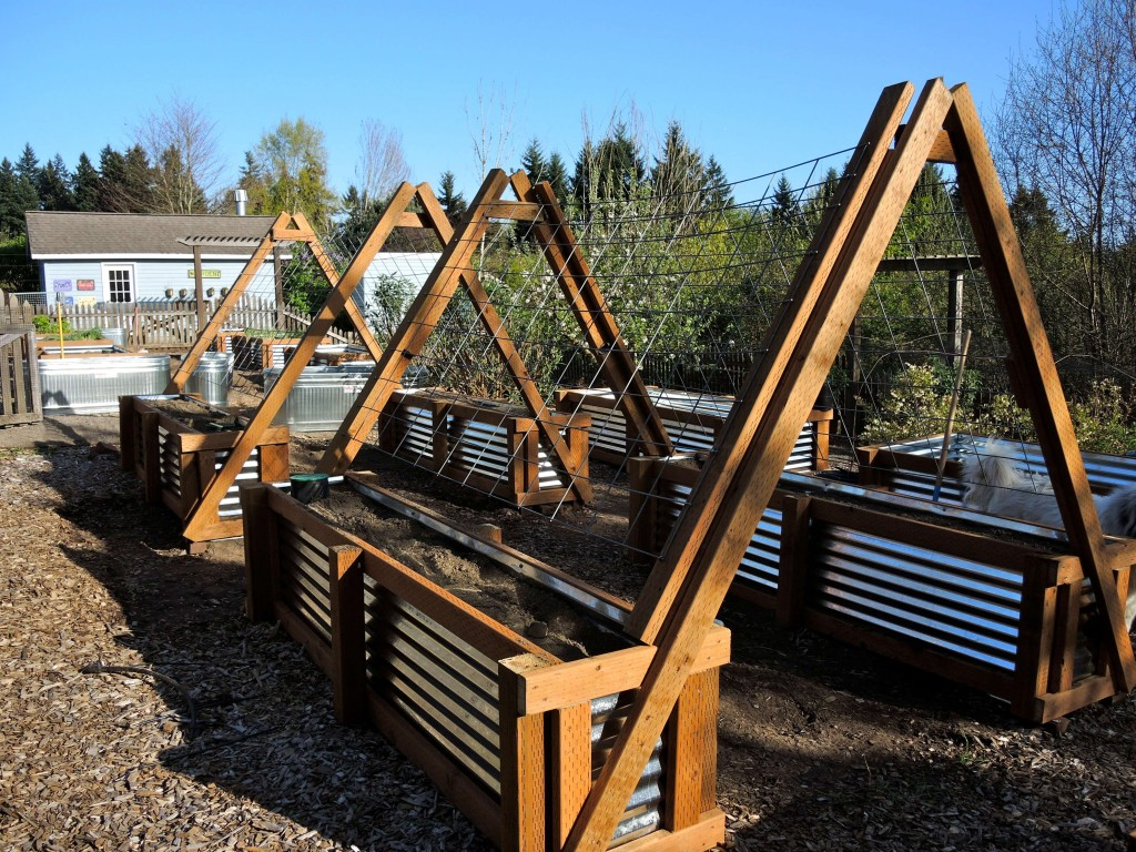 corrugated metal and redwood raised beds