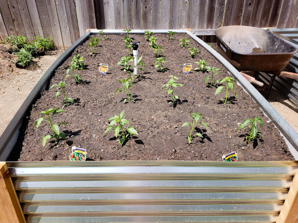 corrugated metal raised beds adding plants