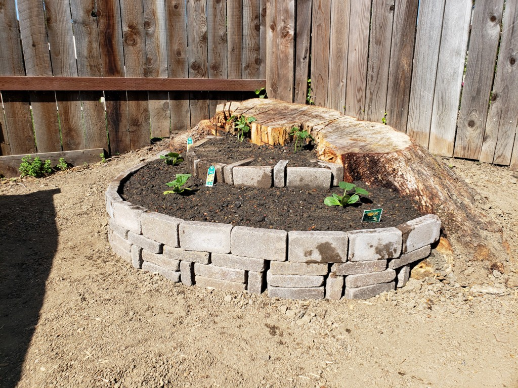 Paver stone raised bed with two layers and utilizing a rotten tree stump