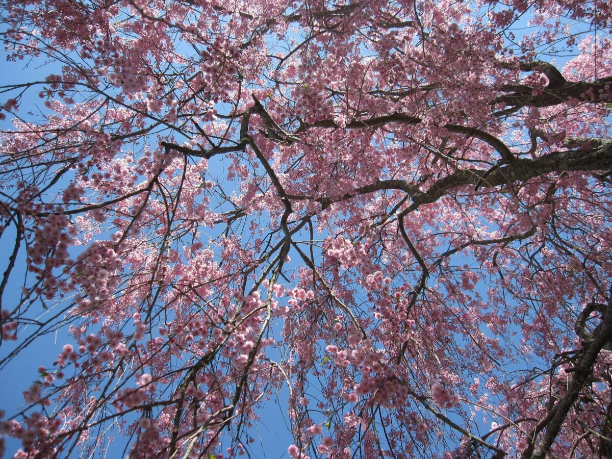 Best trees for both summer shade & winter sun 2 the other day i asked my friend who has his own lawn care business about the best trees to plant in my yard. He's an expert on trees, which is probably why my existing trees are so beautiful and healthy.