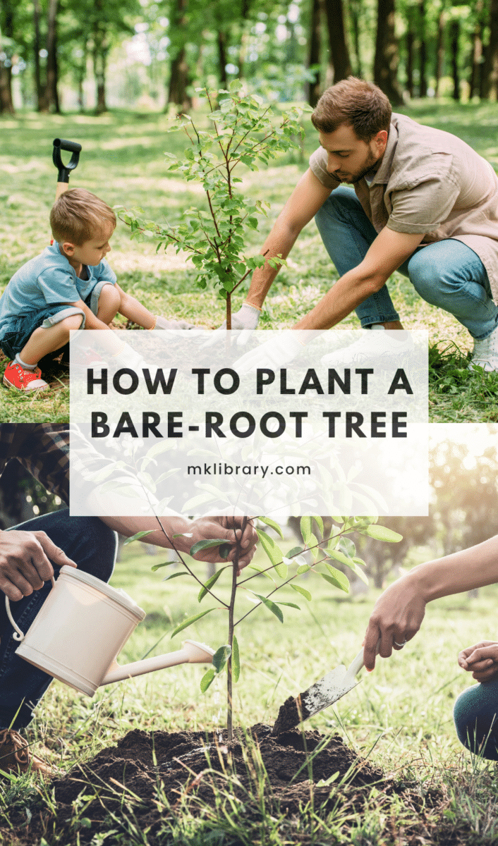 planting a bare-root tree