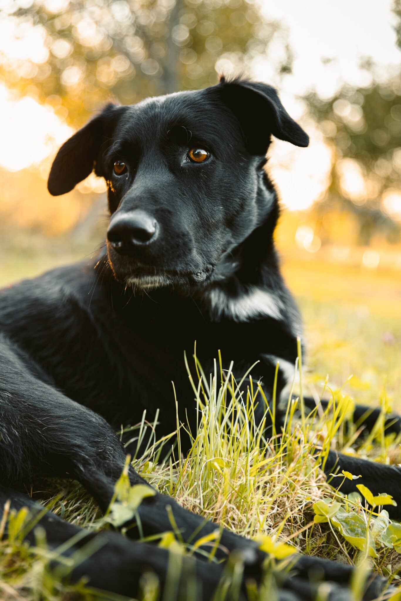 3 fun tricks to teach your dog featured