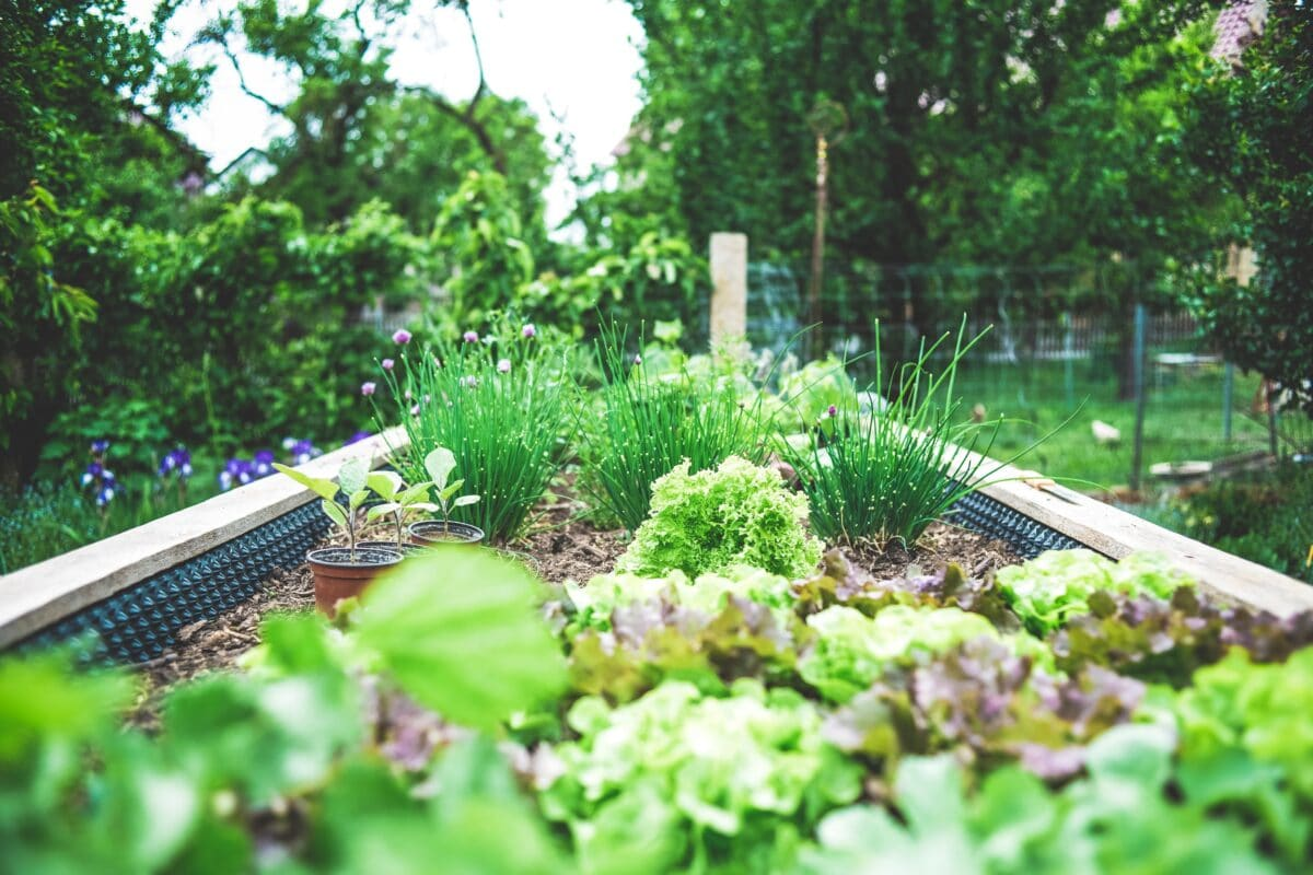 How to create a more eco-friendly garden grow own food