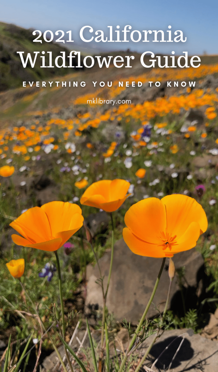 2021 California wildflower guide, everything you need to know