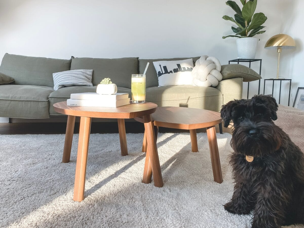 Cleaning tips how to effectively remove pet hair from your home