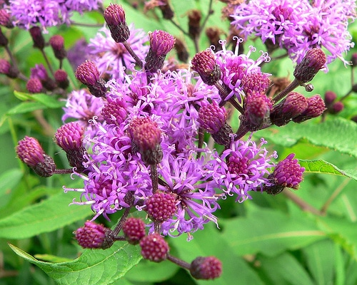 Plants that attract butterflies 1 if your goal is to create a magical butterfly sanctuary in your own backyard, look no further! These must-have flowering plants are sure to attract a variety of butterflies to your yard, in addition to other native pollinators such as hummingbirds and bees.